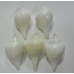 Devadatta Arati Conch Small